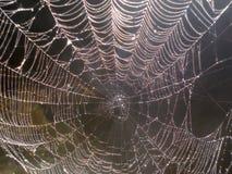 Web de araña que chispea con las perlas del rocío Imagenes de archivo