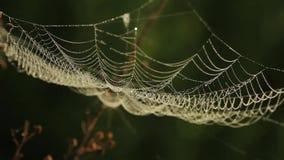 Web de araña que sacude en el viento en bosque almacen de metraje de vídeo