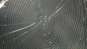 Web de araña y araña almacen de video