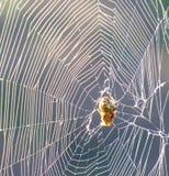 Web de araña y su dueño encogidos en el centro fotografía de archivo libre de regalías