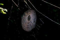 Web de arañas Imagenes de archivo