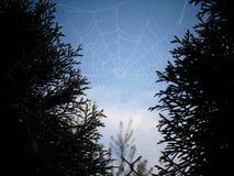 Web de arañas Fotografía de archivo libre de regalías