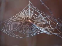 Web de arañas Imagen de archivo libre de regalías