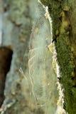 Web de arañas Imagen de archivo