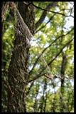 Web de arañas Foto de archivo libre de regalías