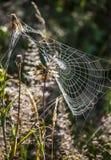 Web de arañas con descensos del agua en el prado Imagen de archivo