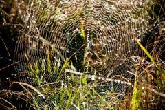 Web de arañas perfecto Imagen de archivo