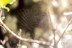 Web de ara?a en el medio del bosque foto de archivo libre de regalías