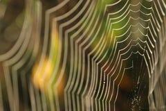 Web de araña con gotas de rocío Imagenes de archivo