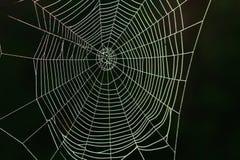 Web de aranha Imagem de Stock Royalty Free