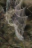 A Web de aranha Imagens de Stock Royalty Free