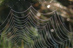 A Web de aranha Fotos de Stock Royalty Free