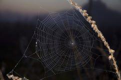 Web de aranha fotos de stock royalty free