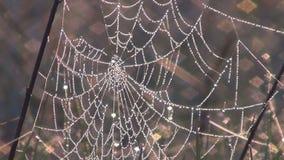 Web de aranha vídeos de arquivo