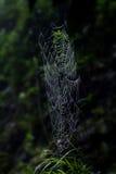 Web de aranha Fotografia de Stock