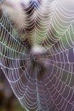 Web de aranha Foto de Stock Royalty Free