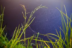 A Web de aranha com água deixa cair na luz solar da manhã imagem de stock royalty free
