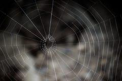 Web de aranha com fundo borrado Foto de Stock