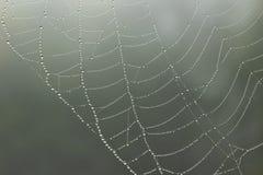 Web de aranha com gotas chuvosas Fotos de Stock