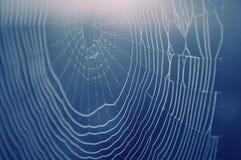 Web de aranha com gotas da água Fotografia de Stock