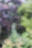 A Web de aranha com gotas de água Foto de Stock Royalty Free
