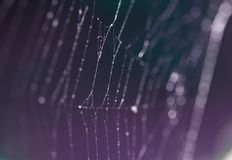 Web de aranha com orvalho mroning nele Fotos de Stock Royalty Free