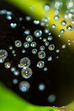 Web de aranha com pingos de chuva Foto de Stock Royalty Free