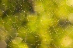 Web de aranha com raios da manhã Imagens de Stock