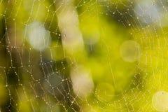 Web de aranha com raios da manhã Fotografia de Stock Royalty Free