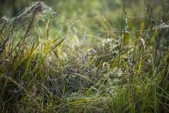 Web de aranha com waterdrops nela Imagens de Stock