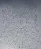 Web de aranha completamente de gotas da chuva Fotografia de Stock Royalty Free