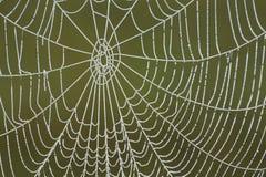 Web de aranha congelado Imagens de Stock