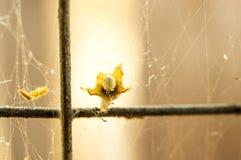 Web de aranha de Nostalgisa no foco obscuro líquido Imagem de Stock Royalty Free