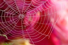 Web de aranha Dewy Fotos de Stock