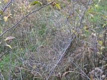 Web de aranha em árvores de um fundo Fotos de Stock