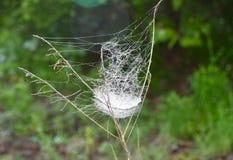 Web de aranha em uma grama de prado Fotos de Stock Royalty Free