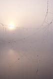 Web de aranha em uma manhã enevoada Foto de Stock