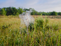A Web de aranha esticada em um galho Foto de Stock