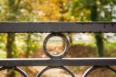 Web de aranha molhada II Fotos de Stock Royalty Free