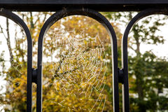 Web de aranha molhada III Fotos de Stock Royalty Free