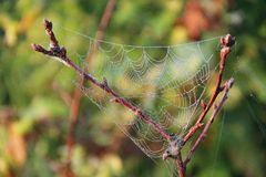 A Web de aranha molhada no close up do ramo com gotas do orvalho Casa da aranha fotos de stock royalty free