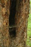 Web de aranha na árvore imagens de stock royalty free