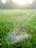 Web de aranha na manhã imagens de stock