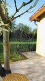 Web de aranha na manhã Fotos de Stock Royalty Free