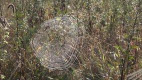 Web de aranha na manhã ensolarada coberta com o orvalho filme