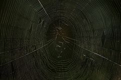 Web de aranha na obscuridade Foto de Stock