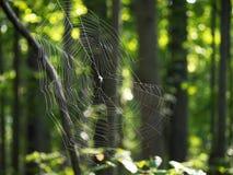 Web de aranha nas madeiras Imagens de Stock