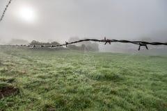 Web de aranha no arame farpado na névoa da manhã imagens de stock