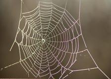 Web de aranha no orvalho da manhã Imagens de Stock