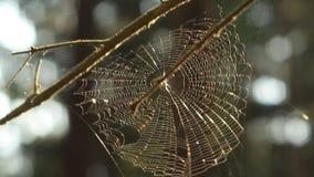 Web de aranha no tempo ventoso vídeos de arquivo